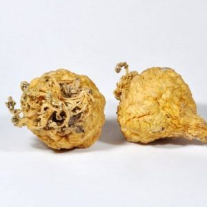 Maca originates from Peru and has been cultivated in the Andes for 2000 years
