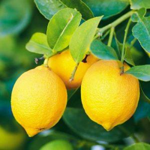 Contains vitamin C: citrus fruit, rose hip, sweet peppers, broccoli, strawberries, kiwis, black currants, potatoes, liver, kidney