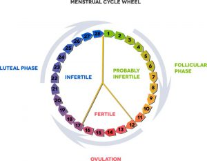 Tips For Tracking Your Ovulation Cycle 1