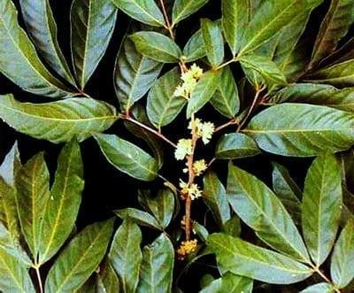 Herbs That Support Male Fertility - Fertilitytips com