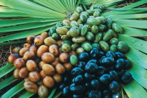 Herbs That Support Male Fertility, Saw Palmetto Berries