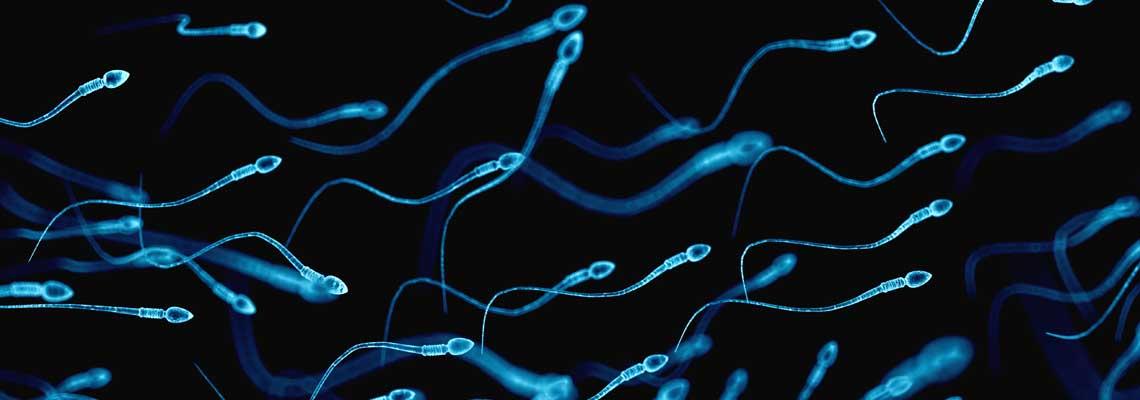 Male Fertility Regulation Through Wnt Signaling 1
