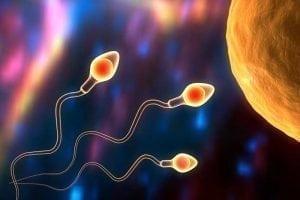 'Spermbots' for Improving Fertility Treatments