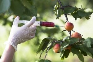 GMO, a Cause of Infertility
