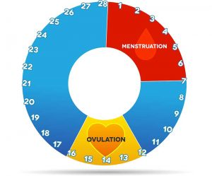 Balancing Menstrual Cycle Phases to Increase Chance of Conception 1