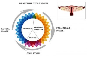 Luteal Phase Defect and it's Impact on Your Fertility
