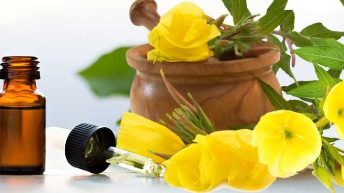 Evening Primrose for Increased Fertility
