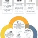 Addressing Infertility Stress with Aromatherapy 3