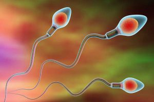 The Influence of Sperm on Artificial Insemination: Frontrunners Have Better Chances