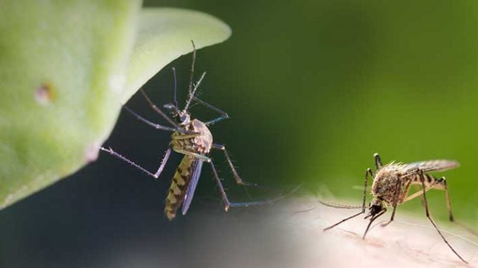 Zika Virus: Study in Mice Shows Devastating Effects on Male Fertility