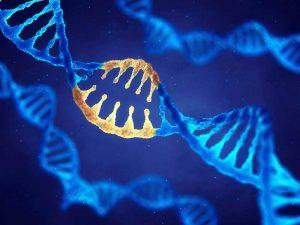 A New Gene Mutation Linked to Unexplained Female Infertility