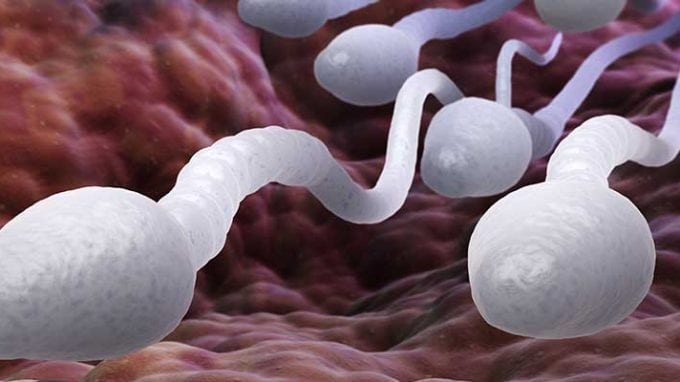 "Using ""Sperm Radar"" Technique to Help with Researching Male Fertility"