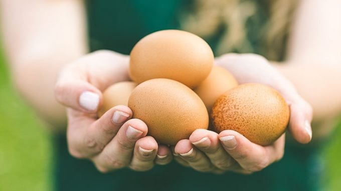 Improving Egg Health: A 90-Day Process