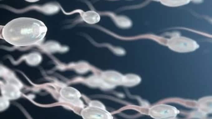 How to Naturally Boost Sperm Motility