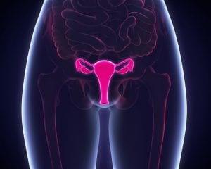 Cervical Health and Your Fertility